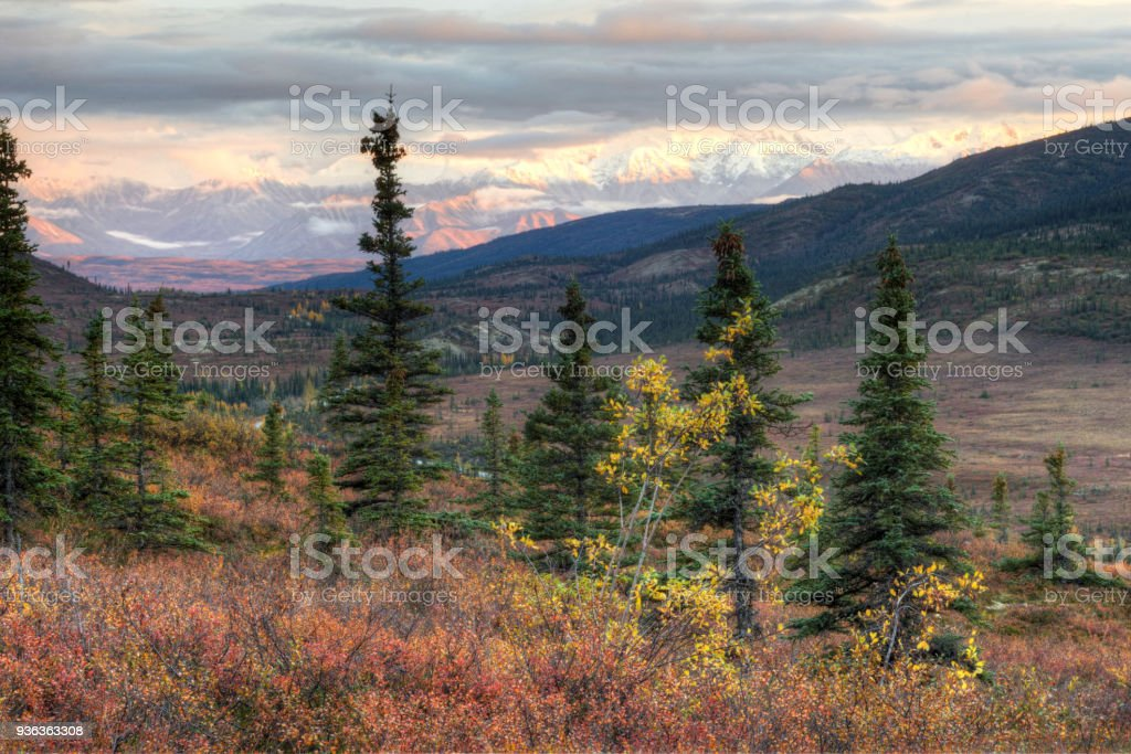 A beautiful valley lays beneath Mt. Denali's snow capped mountain. stock photo