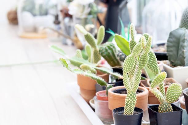schöne verschiedene von grünen kaktus saftig frisch mit zweig auf holztisch für dekor, schönheit kakteen auf dem holztisch für dekoration hipster, pflanze sommer mit wachstum, naturkonzept. - indoor feen gärten stock-fotos und bilder