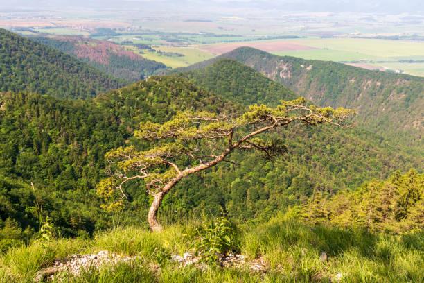 슬로바키아의 아름다운 벨카 파트라 산맥 - 벨리카 파트라 뉴스 사진 이미지