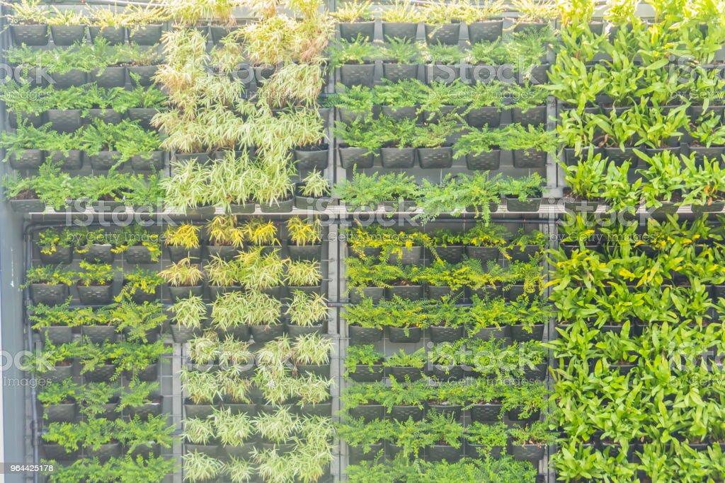 Prachtige tuin verticale wand met de decoratieve bloempot in verticale stijl. Verticale tuin met kleine pot hanger plantenbak ingericht. - Royalty-free Appartement Stockfoto
