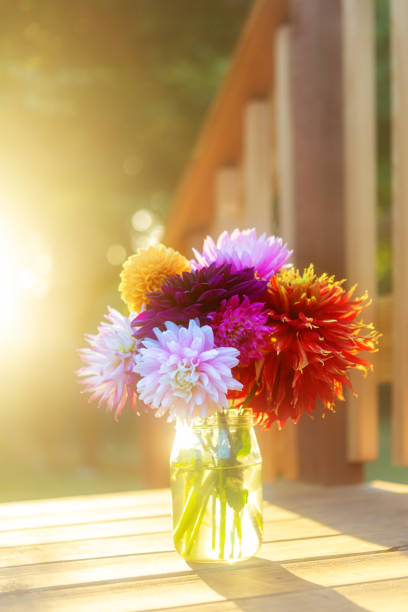 Beautiful vibrant colored Dahlias, brightly lit outside on wood deck with bokeh and sun flare. Copy space above bouquet. Floral background image. stock photo