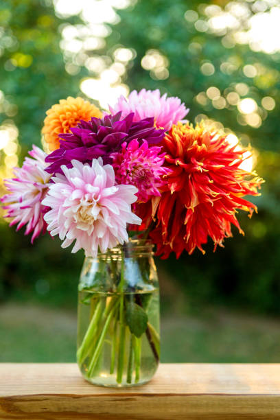 Beautiful vibrant colored Dahlias outside on wood table with bokeh in background. Copy space above bouquet. Vertical Floral background image. stock photo