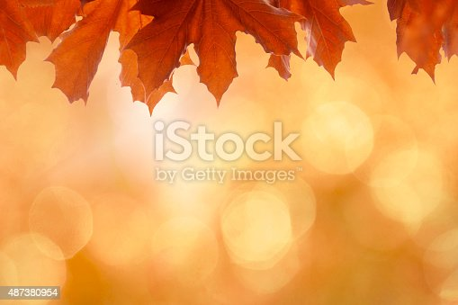 istock Beautiful vibrant orange autumn background with leaves, bokeh and sunlight 487380954