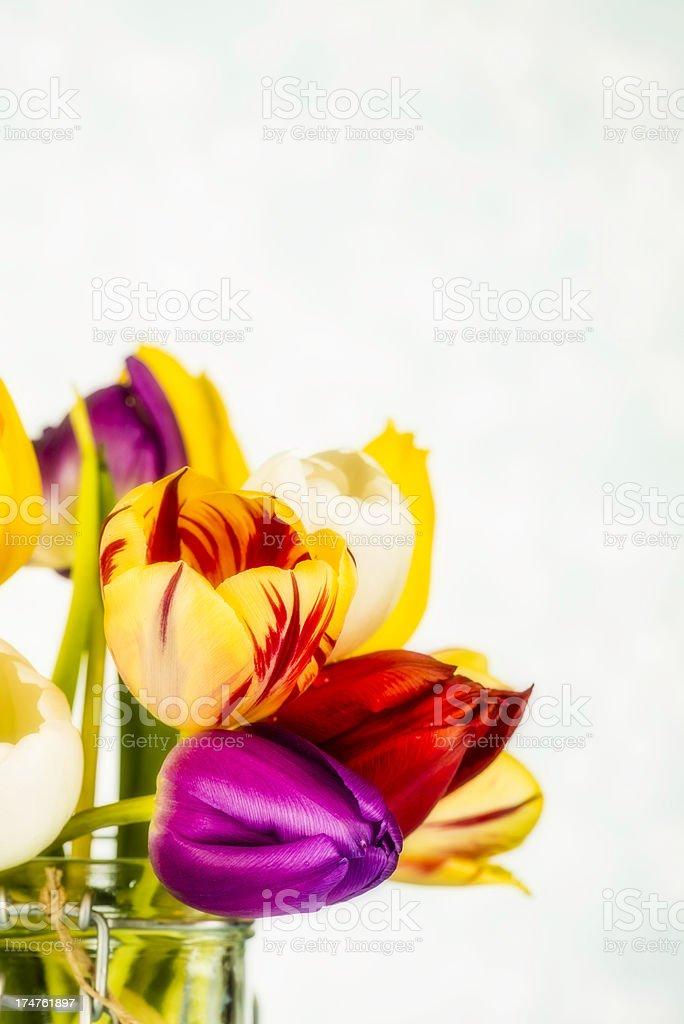Beautiful Vibrant Tulips royalty-free stock photo