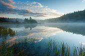 A beautiful view of a silent lake surrounded by trees
