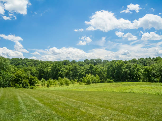 Beautiful View of a Spring Field, Treeline and Cloud Filled Skies A beautiful scenic view of a spring field with green trees in the background and a beautiful blue sky and white fluffy clouds above.     treelined stock pictures, royalty-free photos & images