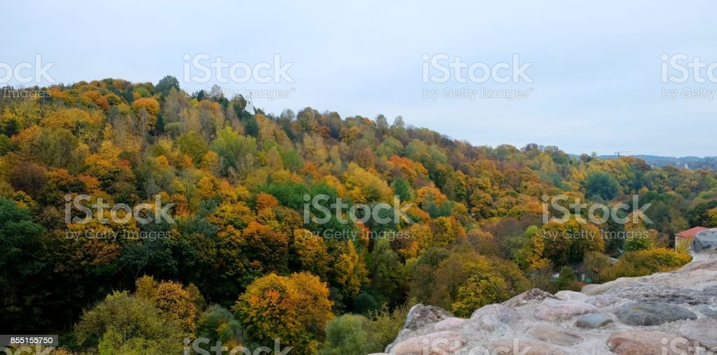 Beautiful view of autumn forest. stock photo