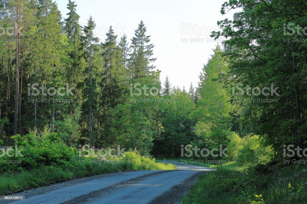 Stabilize yolu ormandaki güzel manzarasına. Hafif mavi gökyüzü arka plan üzerinde sulu yeşil renkli ağaçlar. - Royalty-free Aydınlık Stok görsel