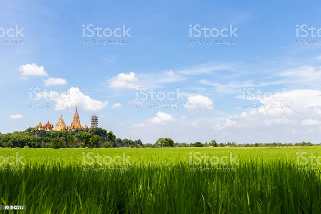 Beautiful view of green field and blue sky. View of paddy field. Unmilled rice. Rice farm royalty-free stock photo