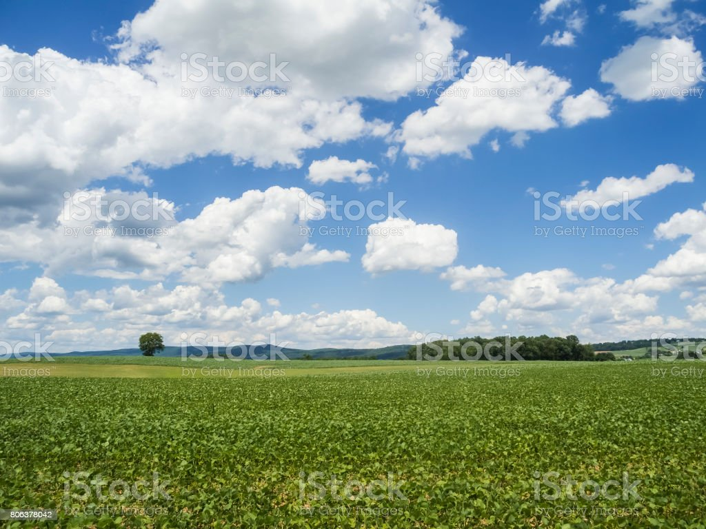 Beautiful View of Green Spring Field and Cloud Filled Sky stock photo