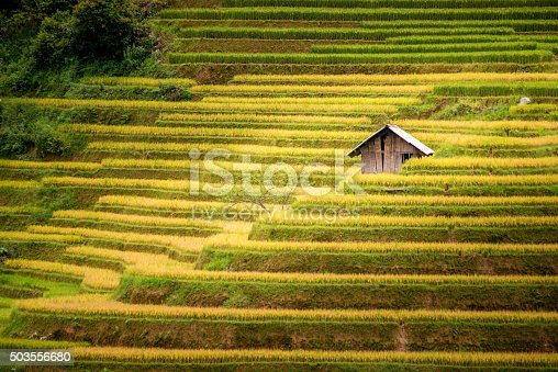 607590542istockphoto beautiful view of house and village in rice terrace 503556680