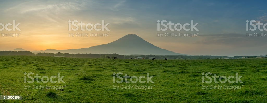 Beautiful view of Mount Fuji and field stock photo