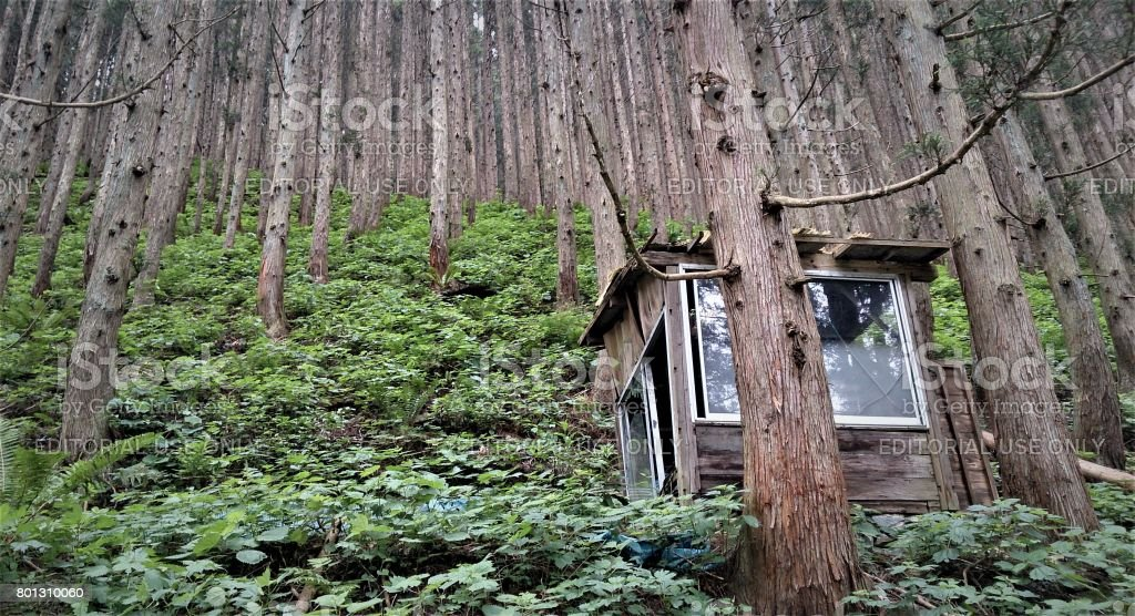 Beautiful view of Nagano forest in Japan. stock photo