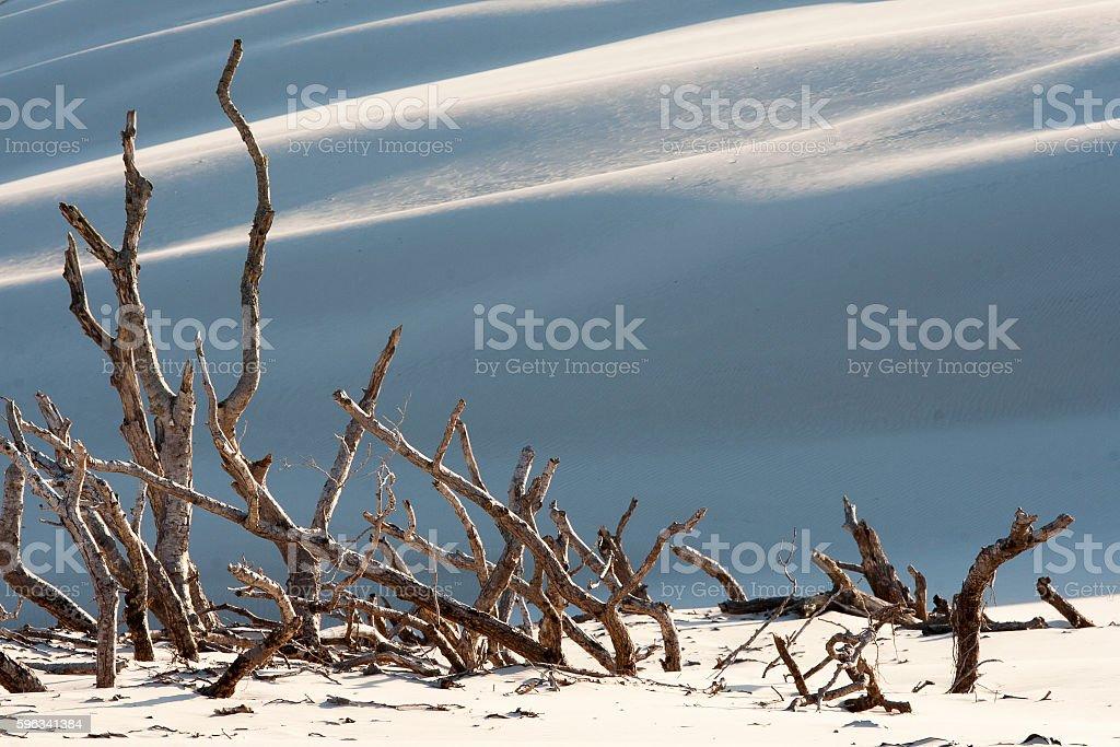 beautiful view of the coastal dunes royalty-free stock photo