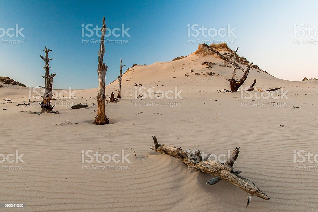 beautiful view of the coastal dunes royalty-free stock photo