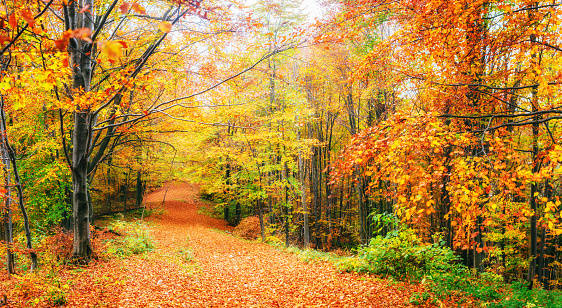 istock Beautiful view of the forest on a sunny day. Autumn landscape. Carpathians. Ukraine 846704638