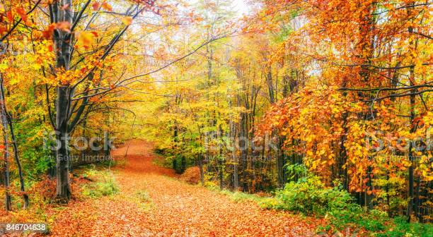 Photo of Beautiful view of the forest on a sunny day. Autumn landscape. Carpathians. Ukraine