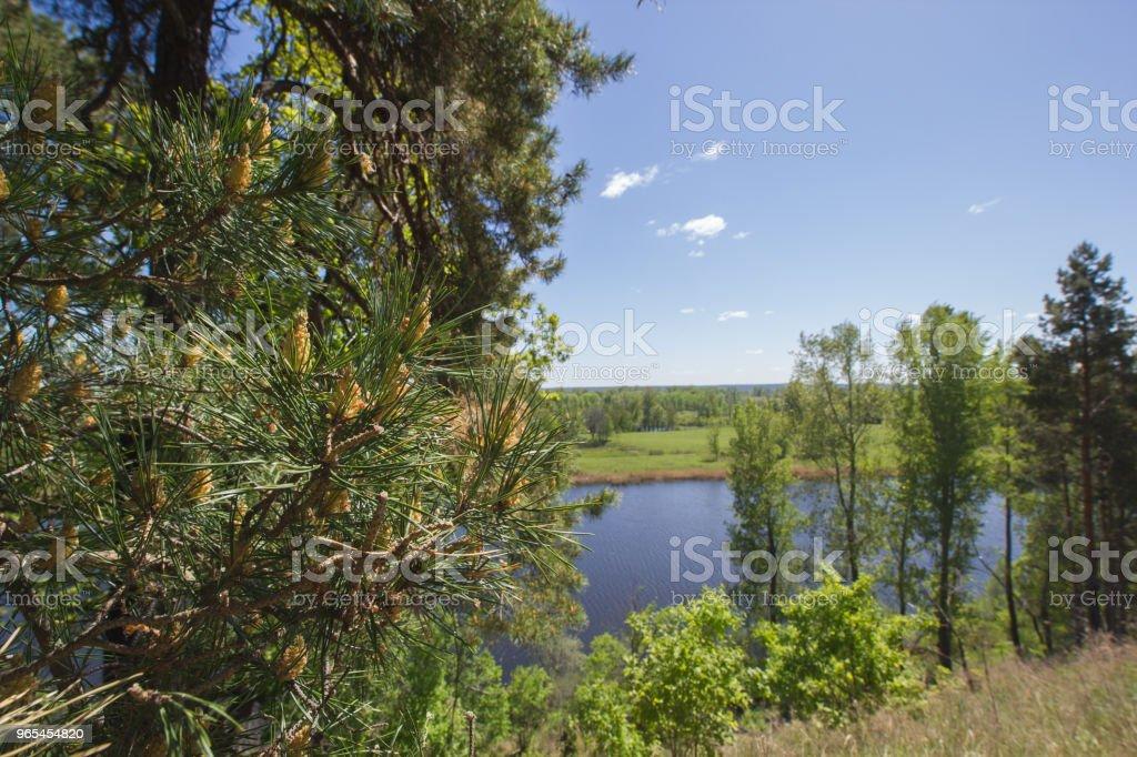 Belle vue sur le lac par le pin - Photo de Arbre libre de droits