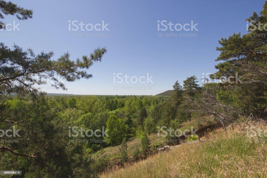 Schöne Aussicht auf den See durch die Pinie - Lizenzfrei Baum Stock-Foto