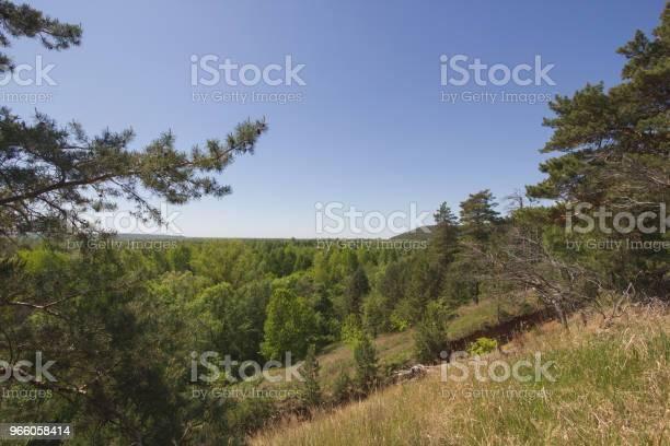 Vacker Utsikt Över Sjön Genom Tallen-foton och fler bilder på Andlighet