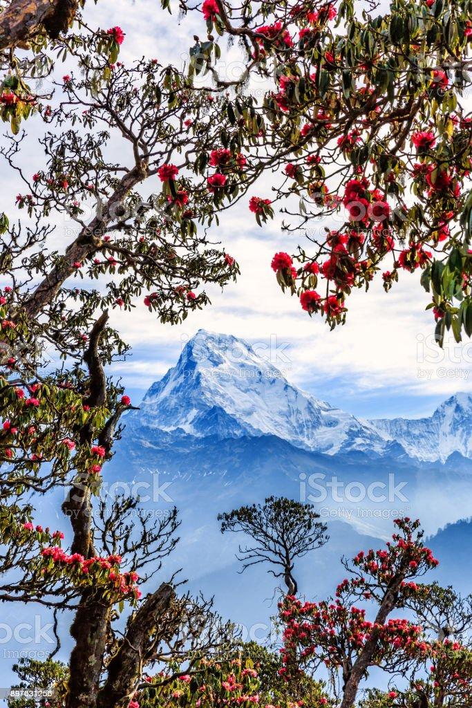 Wunderschöner Blick auf die Berge – Foto