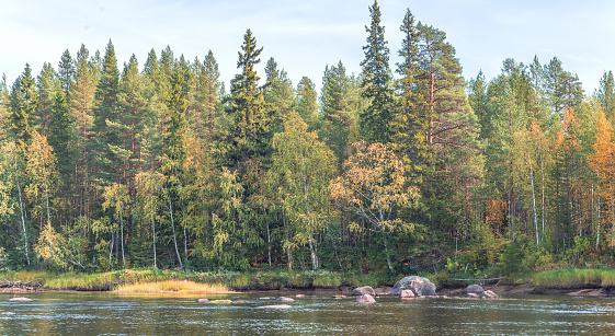 Beautiful view of the river with forest.