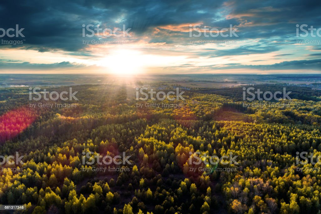 Beautiful view of the tops of trees at sunset. royalty-free stock photo