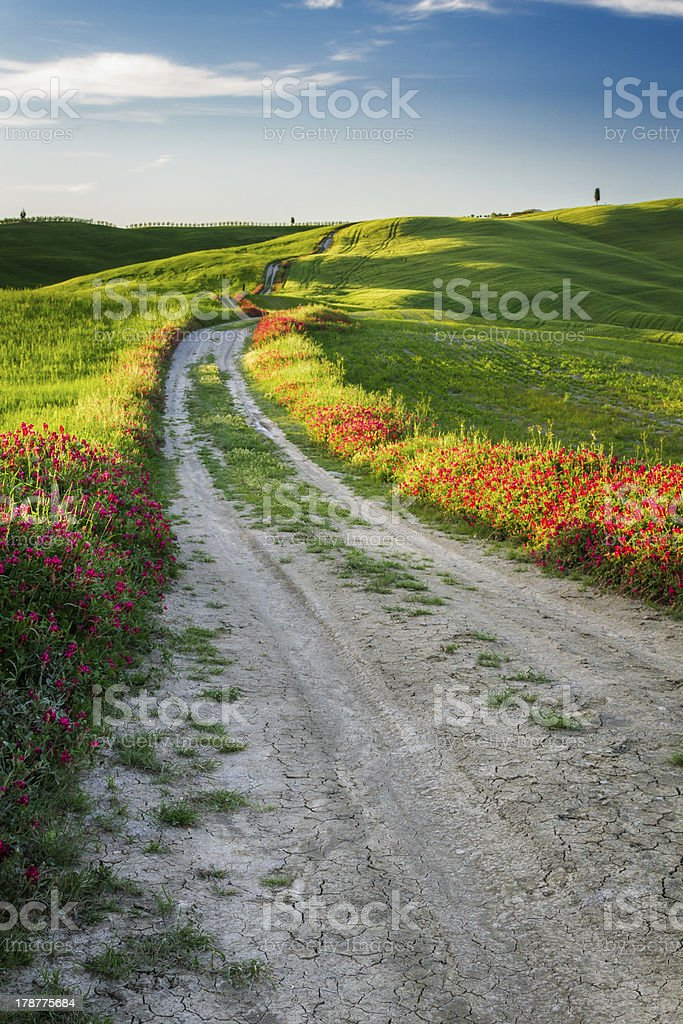 Beautiful view of the tortuous path at sunset in Tuscany royalty-free stock photo