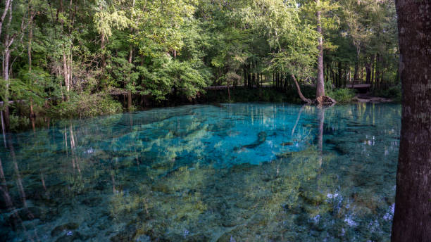 beautiful view of the turquoise crystal clear waters of the lagoon of ginnie springs, florida. usa - источник стоковые фото и изображения