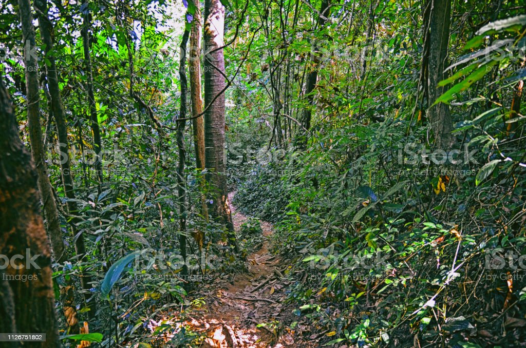 Beautiful view of tropical forest at Khao Yai national park in Thailand stock photo