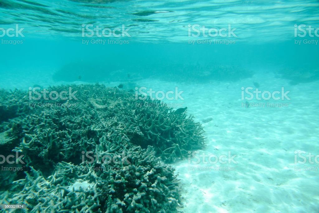 Beautiful view of underwater world. Grey dead coral reefs, multiply fishes, white sand and turquoise water. Indian ocean. stock photo