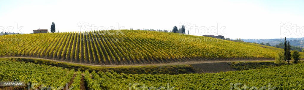 Beautiful View of Vineyards in Italy. Tuscany Region in Autumn Season. royalty-free stock photo
