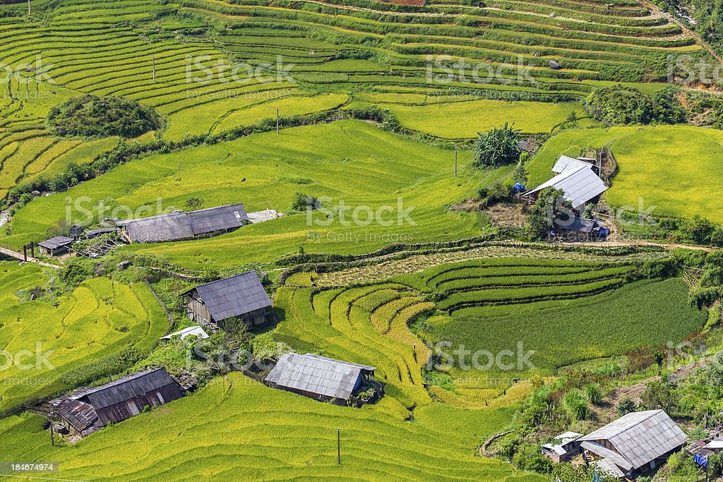 Beautiful view, Rice field terraces royalty-free stock photo