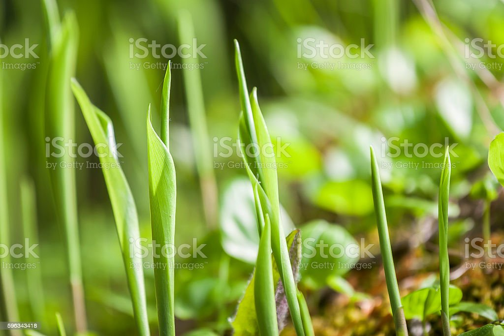 beautiful view spring green grass royalty-free stock photo