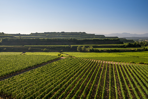 Beautiful Vineyard Terraces In Ihringen, South Germany