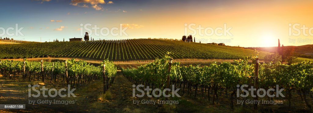 Beautiful vineyards at sunset in Tuscany, Italy. stock photo