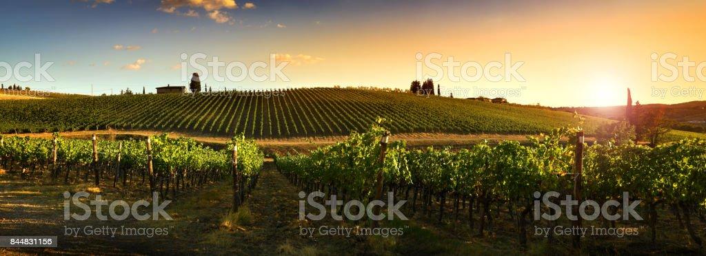 Beautiful vineyards at sunset in Tuscany, Italy. - fotografia de stock