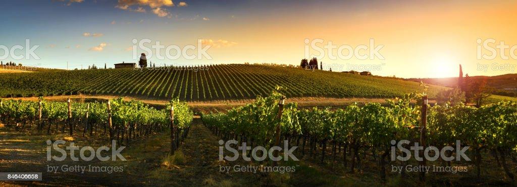 Beautiful vineyards in Chianti regio, Tuscany Countryside. Italy. stock photo