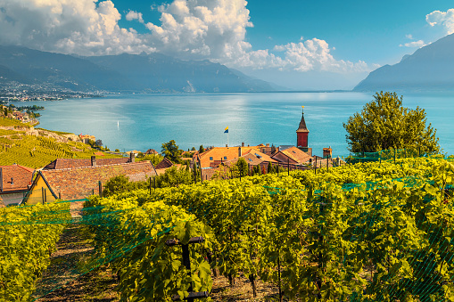 Beautiful vineyards in Lavaux region near Chexbres, Vaud, Switzerland