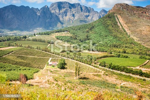 High view of mountains and vineyards, Winelands, Franschhoek, South Africa