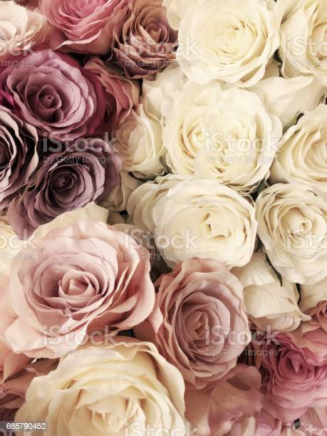 Beautiful vintage rose background white pink purple violet cream picture id685790452?b=1&k=6&m=685790452&s=612x612&h=p h08jak41rv1ramnp elfzp6plftesmte1kys1jwxw=