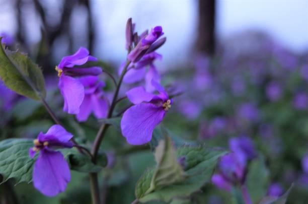 beautiful violet flower stock photo