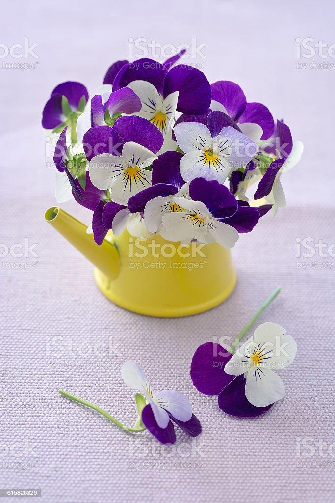 Schöne lila Blumen – Foto