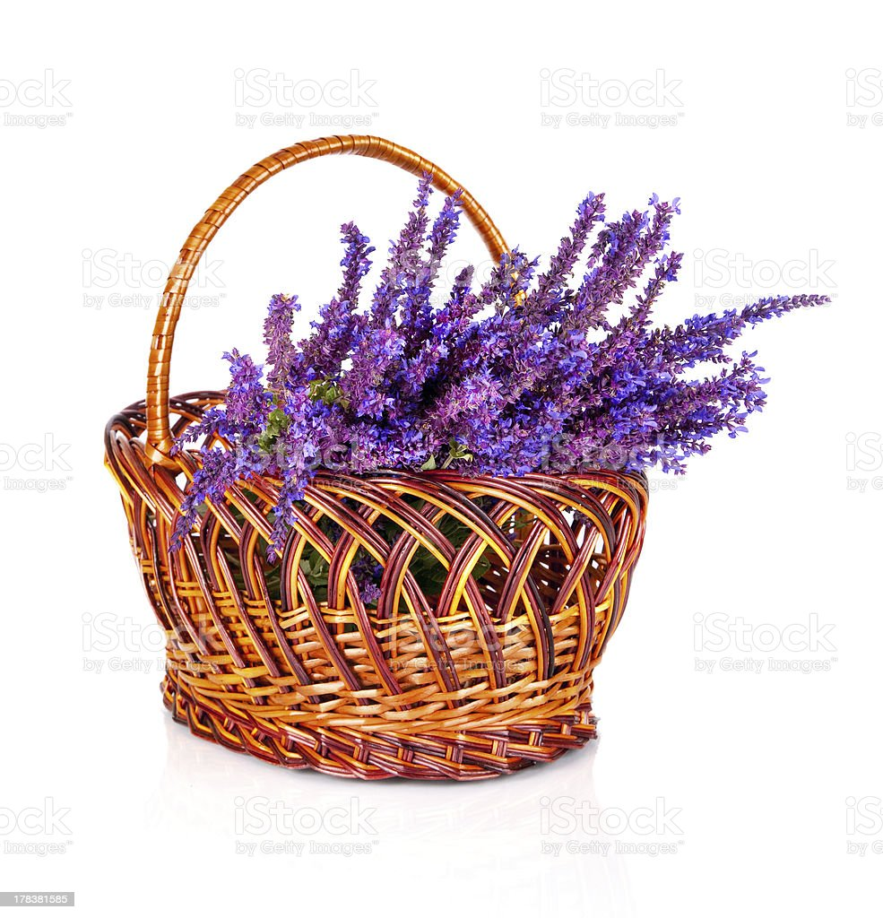 Beautiful violet wild flower  in basket isolated royalty-free stock photo