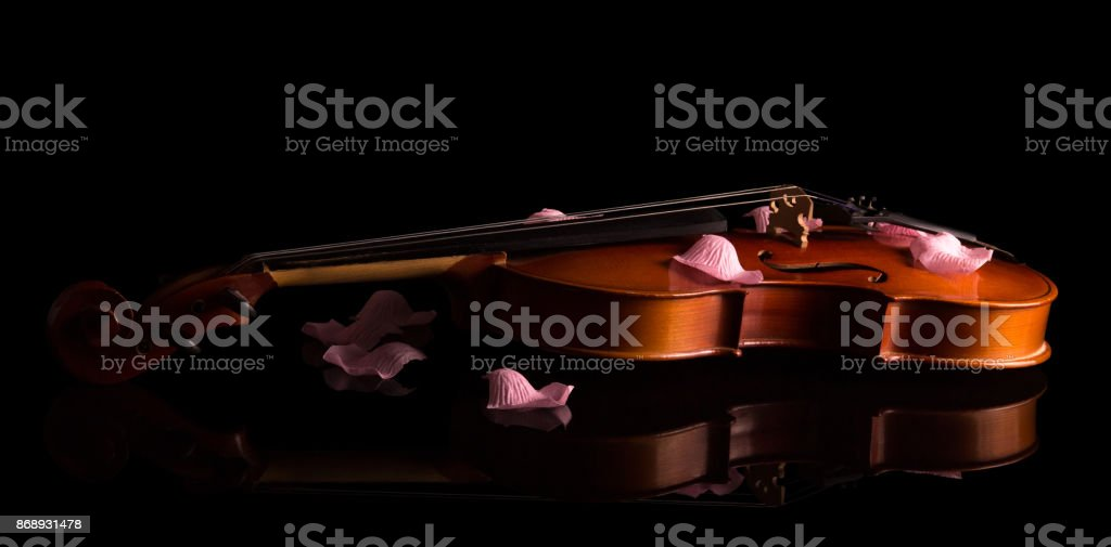 Beautiful violin with rose petals, isolated on a black stock photo