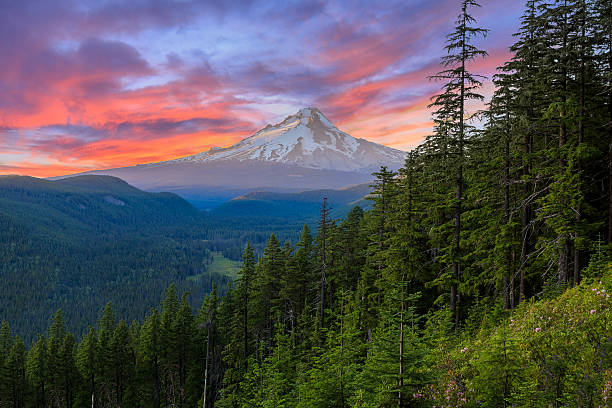 Beautiful Vista of Mount Hood in Oregon, USA. Majestic View of Mt. Hood on a bright, colorful sunset during the summer months. mt hood stock pictures, royalty-free photos & images