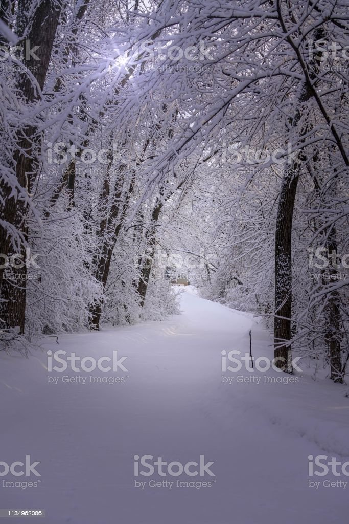 Beautiful walking trail through a snowy forest stock photo