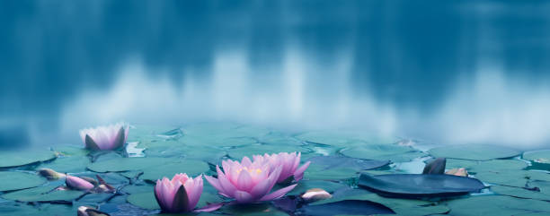 Beautiful water lily idyll on smooth water surface blurred summer picture id1263160775?b=1&k=6&m=1263160775&s=612x612&w=0&h=azc 2hre9t07wbzckzzllufp88cnpab4uw 9zpwtl3o=