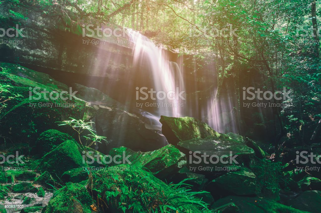 Beautiful waterfall in forest. stock photo