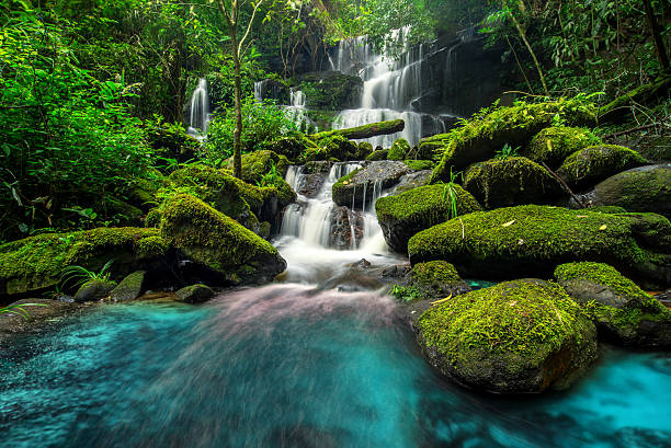 beautiful waterfall in green forest in jungle - waterfall stock photos and pictures